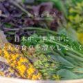 3月27日(水) 29日(金) 31日(日) ランティミテ ノマド@Odakyu湘南GATE (旧:小田急百貨店ふじさわ)